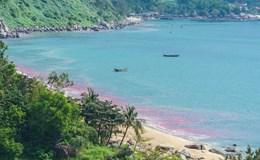 Đà Nẵng: Sự thật về vệt nước đỏ tại Bán đảo Sơn Trà