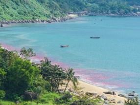 Vệt nước màu đỏ tại biển Đà Nẵng là trứng ruốc