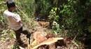 Sớm xét xử vụ phá rừng hồ thủy điện Đồng Nai 5