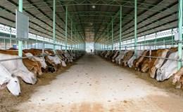 """Vụ """"mất tích"""" dự án nuôi bò công nghiệp ở Quảng Trị: Bế tắc do Công ty Lũng Lô 5 không hợp tác"""