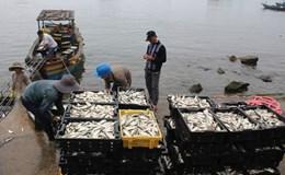 Tàu cá cập cảng Vũng Áng đầy ắp hải sản