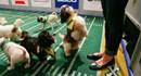 Trò chơi bóng bầu dục cho cún cưng thu hút hàng triệu người theo dõi ở Mỹ