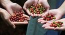 Từ cà phê ngon đặc sắc  đến sản phẩm được vinh danh