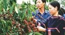 Khi người trồng cà phê được tôn vinh