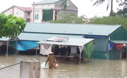 Bộ GD&ĐT ra công điện cho học sinh, sinh viên nghỉ học nếu mưa lũ lớn