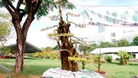"""Ngắm những cây cảnh giá """"khủng"""" ở chợ hoa xuân Sài Gòn"""