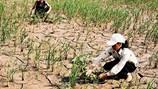 Biến đổi khí hậu Nhìn từ Quảng Nam