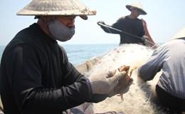 Ngư dân 4 tỉnh miền Trung sẽ khai thác hải sản gần bờ