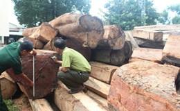 Vụ bắt 5 xe tải chở 50m3 gỗ lậu tại Gia Lai: Cần điều tra đường đi gỗ lậu