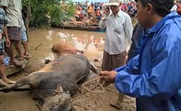 Mưa lớn, thủy điện trên sông Ba ồ ạt xả lũ: Nỗi khổ của người dân vùng hạ du