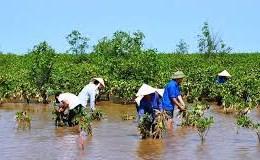 Con tôm, cây đước và biến đổi khí hậu vùng ĐBSCL