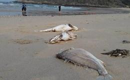 Cần thiết phải khởi tố để điều tra vụ cá chết hàng loạt