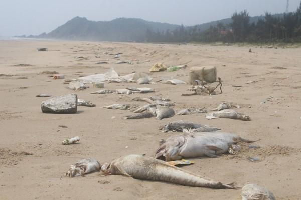 Chính thức công bố nguyên nhân cá chết hàng loạt ở miền Trung: Formosa là thủ phạm
