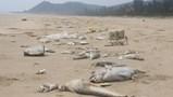 Công bố nguyên nhân cá chết hàng loạt: Formosa là thủ phạm, cam kết bồi thường 500 triệu USD