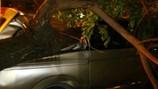 Clip: Giông lốc lớn cây đổ đè bẹp 2 ô tô – một tài xế bị thương