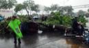 Cây bật gốc trong mưa lớn, đè trúng người đi đường