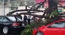 Hai xế hộp bạc tỷ bị cây rơi trúng trên đường Trần Quốc Thảo