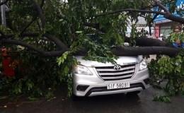 Tài xế tung cửa bỏ chạy vì cây đổ đè vào vào xe hơi