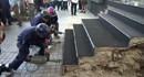 Cuộc tranh luận pháp lý về việc đập bỏ bậc tam cấp của khách sạn 5 sao