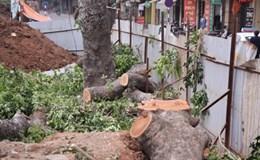 Bạn nghĩ gì khi chủ tịch thành phố Hà Nội yêu cầu cử cán bộ ra nước ngoài học trồng cây xanh?