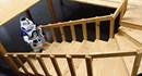 Robot leo cầu thang xoắn ốc