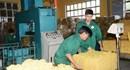 Tây Nguyên khan hiếm lao động ngành caosu