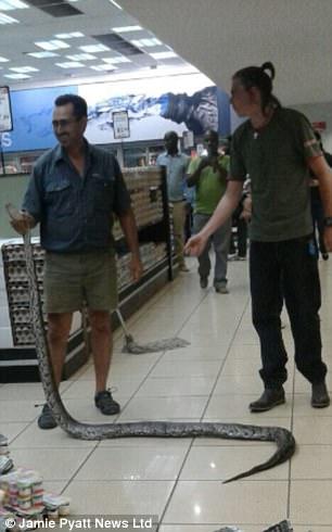 Hoảng hồn phát hiện con trăn khổng lồ nằm trong quầy hàng siêu thị