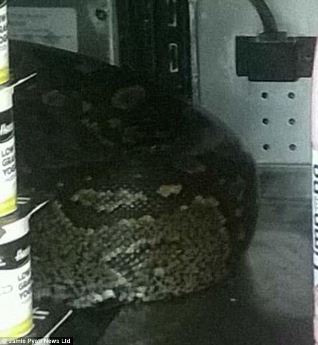 Hoảng hồn phát hiện con trăn khổng lồ nằm trong quầy hàng siêu thị - Ảnh minh hoạ 3