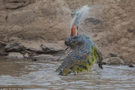 Kinh hãi cá sấu đói xé xác linh dương rồi nuốt chửng - Ảnh minh hoạ 3
