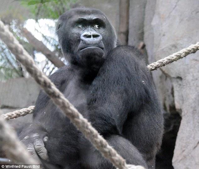 Xúc động hình ảnh khỉ mẹ đau đớn tuyệt vọng trước cái chết của con - Ảnh 4