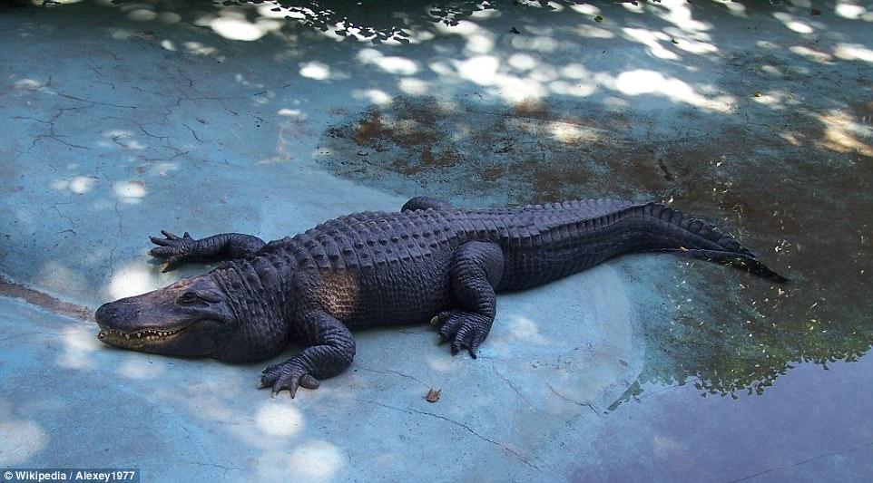 Choáng ngợp với những sinh vật sống lâu đời nhất thế giới - Ảnh minh hoạ 6