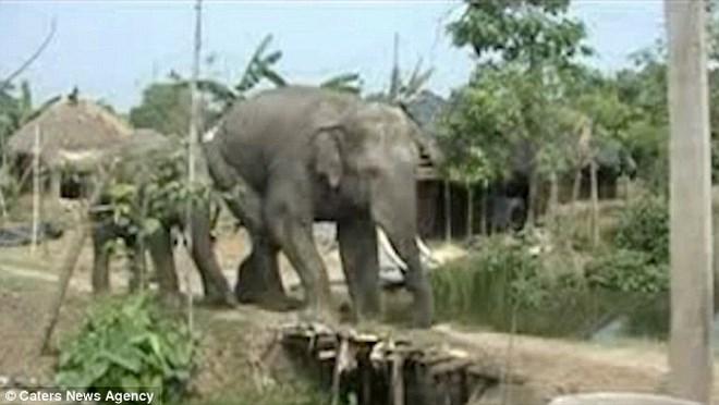 Thót tim cảnh người đàn ông suýt bị con voi nghiền nát