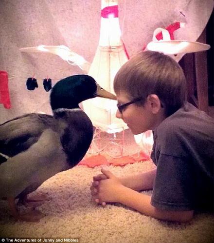 Tình bạn đáng kinh ngạc giữa cậu bé 10 tuổi với con vịt đáng yêu