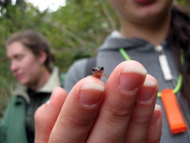 Phát sốt với trào lưu chụp ảnh các loài động vật khi còn nhỏ