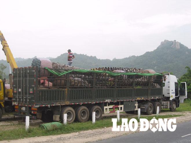Cảnh báo thương nhân Trung Quốc mua cây thốt nốt cao tuổi