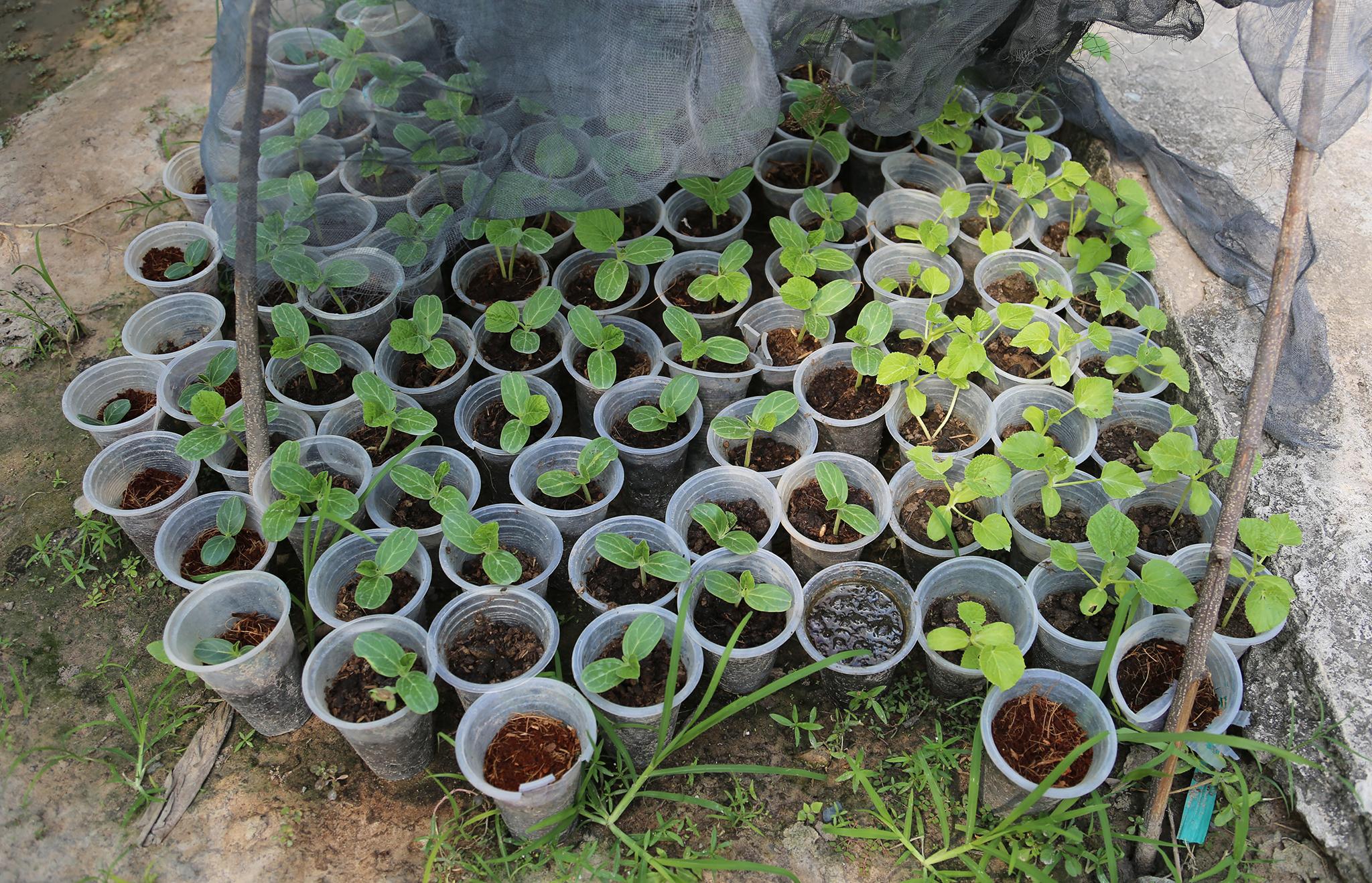 Mục kích khu tăng gia sản xuất rau sạch của Lữ đoàn Phòng không 71 - Ảnh minh hoạ 5