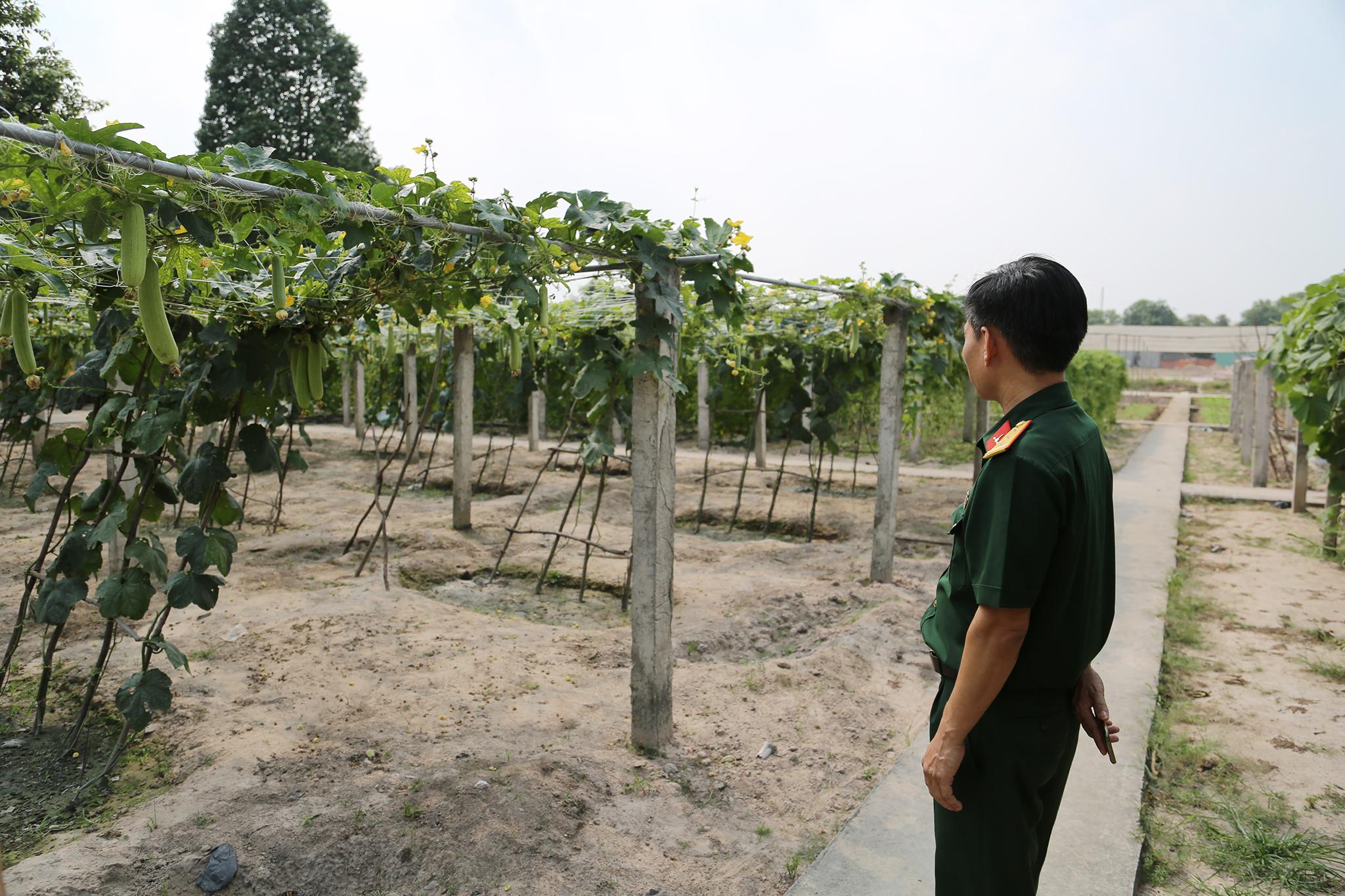 Mục kích khu tăng gia sản xuất rau sạch của Lữ đoàn Phòng không 71 - Ảnh minh hoạ 4