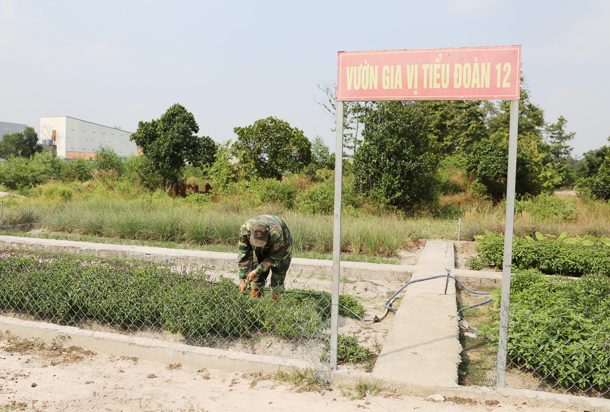 Mục kích khu tăng gia sản xuất rau sạch của Lữ đoàn Phòng không 71 - Ảnh minh hoạ 17