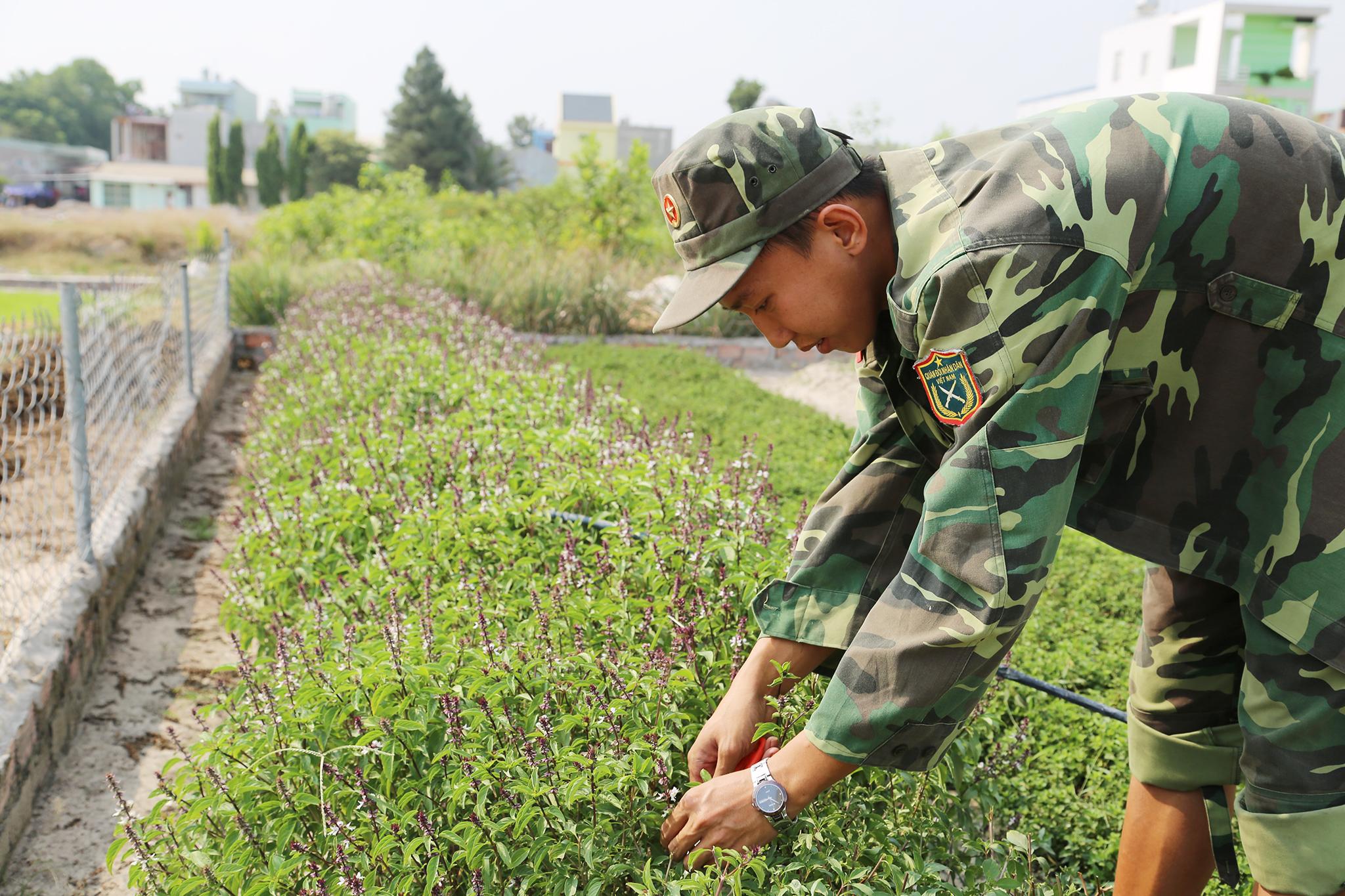 Mục kích khu tăng gia sản xuất rau sạch của Lữ đoàn Phòng không 71 - Ảnh minh hoạ 18