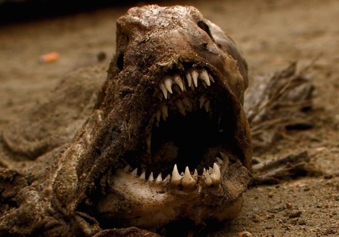 """""""Rợn người"""" với 10 sinh vật hoang dã kỳ dị nhất thế giới - H5"""