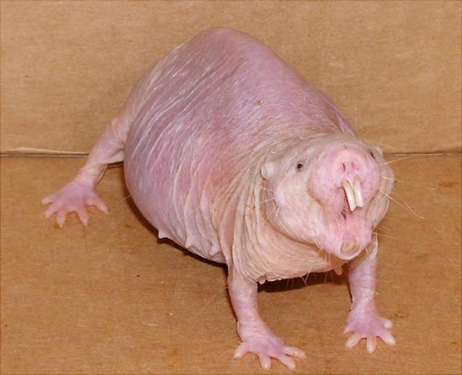 """""""Rợn người"""" với 10 sinh vật hoang dã kỳ dị nhất thế giới - H3"""