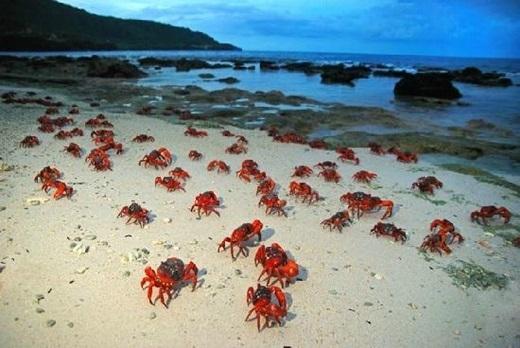 """Khiếp sợ với 11 """"hòn đảo động vật"""" trên thế giới - H5"""