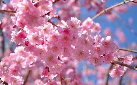 Chiêm ngưỡng 10 loài hoa đẹp nhất thế giới