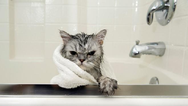 Hài hước với những cách chống nóng của các loài động vật