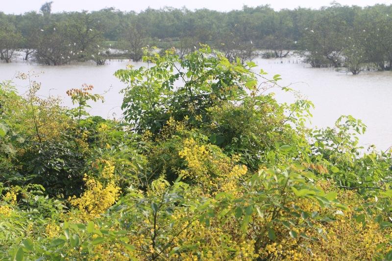 Đẹp mê hồn hoa giêng giếng vàng rực bên bờ sông Lam - Ảnh minh hoạ 3