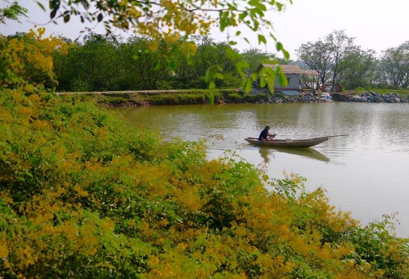 Đẹp mê hồn hoa giêng giếng vàng rực bên bờ sông Lam - Ảnh minh hoạ 5
